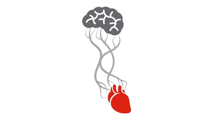 Brain and heart connection